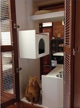 City Cat Clinic Exclusively For Cats